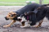 El Ayuntamiento de Totana ha tramitado en lo que va de año un total de 12 expedientes de licencia para la tenencia de animales potencialmente peligrosos