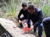 Liberan 15 ejemplares de sapo partero b�tico en Sierra Espuña tras desarrollarse en un acuario para asegurar su supervivencia