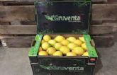 """GRUVENTA prevé como """"muy dinámica"""" la campaña de limón Verna"""