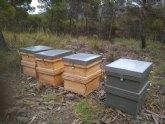Se pueden presentar, hasta el 30 de abril, ofertas para el aprovechamiento apícola de determinados montes de titularidad municipal