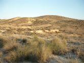 El PSOE denuncia la desaparición de dieciocho hectáreas de hábitats de interés comunitario en el paraje de Las Cumbres de Alcantarilla