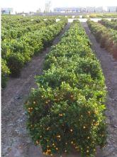 Situación del sector agrícola en Torre Pacheco