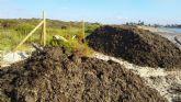 El Ayuntamiento traslada arribazones de posidonia hasta la Playa de la Llana para frenar la erosión litoral