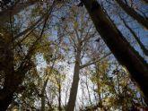 Huermur celebra la actualización del catálogo de árboles monumentales
