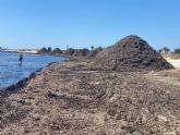 El Ayuntamiento traslada arribazones de posidonia hasta la Playa de la Llana para reforzar su barrera litoral