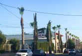 Las palmeras de la calle Antón Tobalo reciben su poda de verano