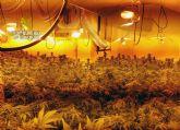 La Guardia Civil desmantela dos viviendas dedicadas al cultivo de plantas de marihuana en Cieza