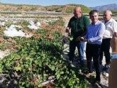 La Comunidad facilitar� a los agricultores m�s de 1.500 kilos de producto para curar los cultivos afectados por el granizo