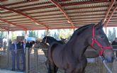Puerto Lumbreras acoge este fin de semana una nueva edición de la Feria de Ganado Equino