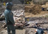 La Guardia Civil esclarece un delito contra los recursos naturales y el medio ambiente en una granja de cerdos de Mazarrón