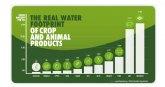 En la Semana del Agua, el aguacate se consolida como uno de los alimentos más sostenibles y con menor huella hídrica