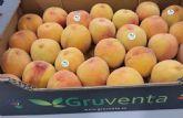 """GRUVENTA prevé como """"muy positiva"""" la próxima campaña de fruta de hueso"""