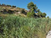 El Ayuntamiento de Bullas solicita a la CHS limpiar el río de cañas y plantar Bosque de Ribera