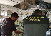 La Guardia Civil desmantela un invernadero de marihuana con más de 200 plantas en Fortuna