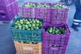 La Policía Local interviene 300 kilos de limones supuestamente robados