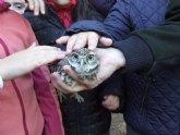 Medio Ambiente libera dos mochuelos y un gavil�n en Sierra Espuña tras su paso por el Centro de Recuperaci�n de Fauna Silvestre
