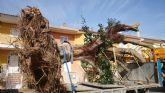 Se traslada un gran ejemplar de Ficus Australis al Jard�n Paco Rabal
