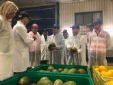 La campaña regional del melón prevé una producción de 208.000 toneladas