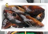 La Guardia Civil detiene in fraganti a dos pescadores furtivos en el espacio natural de Cabo Tiñoso