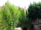 La Guardia Civil desmantela en Murcia un invernadero clandestino dedicado al cultivo ilícito de marihuana