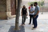 El Ayuntamiento coloca más de 300 cubrealcorques en los árboles del casco histórico para mejorar la seguridad de los peatones
