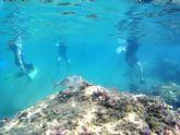 El proyecto �Camonmar3� pone de relieve la biodiversidad marina de la Bah�a de Mazarr�n