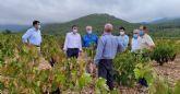 La Comunidad apoya al sector vitivinícola a través de ayudas y líneas de investigación que impulsen la modernización y competitividad