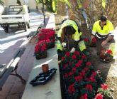 60.000 flores llenarán las calles de Murcia con motivo de la campaña de invierno