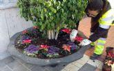 Los jardines de pedanías se llenan de colores en Navidad con más de 9.000 flores