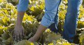Las 5 plagas que más han dañado a los cultivos de Murcia en 2020