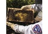 La Unidad de Apicultura de Protección Civil de Totana activa el dispositivo de recogida de enjambres de abejas coincidiendo con la floración primaveral
