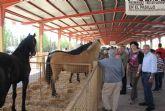 Puerto Lumbreras acogerá este fin de semana la  Feria de Ganado Equino