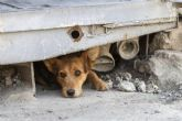 Se prorroga un año el servicio de recogida de animales abandonados, vagabundos o extraviados,