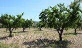 Un estudio analizará los efectos negativos del cambio climático en los frutales de hueso