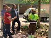 El Ayuntamiento revisa los ejemplares de pino y eucalipto para aplicar tratamientos de endoterapia