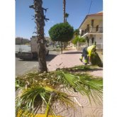 El Ayuntamiento lleva a cabo labores de tala y fumigación en las palmeras del municipio