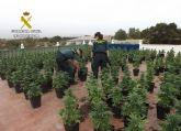 Cae en Fuente Álamo un grupo delictivo dedicado al cultivo ilícito de marihuana