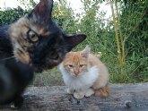 Colonias felinas en Alcantarilla