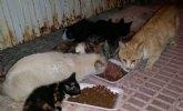 Se tramita el contrato para la gestión de la recogida de animales abandonados, vagabundos o extraviados