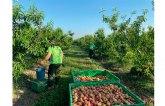 """UPA pide el fin del """"maltrato a la fruta"""" por parte de algunas cadenas de la distribución"""