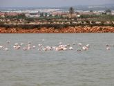 Numerosos tipos de aves encuentran alimento en Las Salinas de San Pedro del Pinatar gracias a la diversidad de charcas
