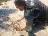 La Guardia Civil interviene casi una treintena de jilgueros capturados, al parecer, de forma ilegal