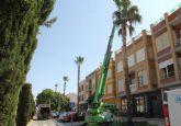 El Ayuntamiento inicia un plan de poda de palmeras para mejorar la seguridad y estética del municipio