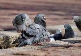 El control de plagas de aves, un problema con una fácil solución, según la web 'Control de aves'