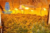 Desmantelada una plantación de marihuana en un piso en pleno centro de Alcantarilla
