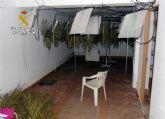La Guardia Civil desmantela un invernadero clandestino de cultivo de marihuana en Ricote