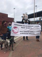 Podemos exige revisar los protocolos de transporte de animales vivos fuera de la UE