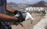 Islas e islotes del puerto de Cartagena: laboratorios al aire libre para la conservación de la biodiversidad