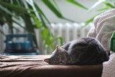 6 trucos extraordinarios para combatir los pelos de nuestras mascotas (sin despeinar los nuestros)