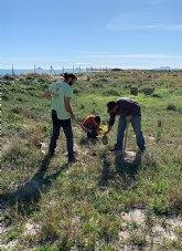 ANSE y Salinera Española restauran las dunas de La Llana en el marco del LIFE Salinas